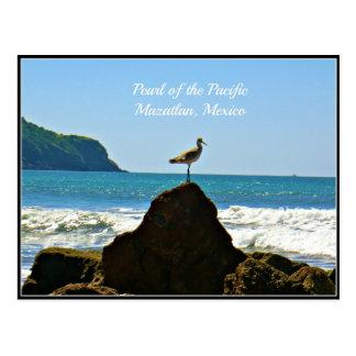 Perla del Pacífico, tarjeta de la gaviota de Postales