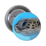Perno de la tortuga de mar verde pin