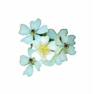 Perno salvaje de los rosas blancos pin fotoescultura