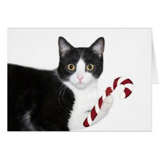 ¡Pero quise el catnip! Tarjeta De Felicitación
