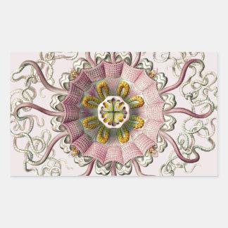 Peromedusae de Ernst Haeckel