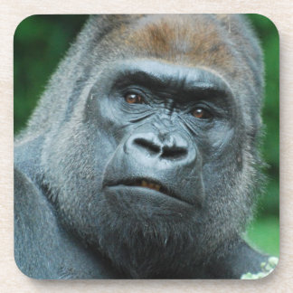 Perplexed Gorilla Coaster