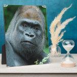"""Perplexed Gorilla Plaque<br><div class=""""desc"""">Great gorilla with a stern face.</div>"""