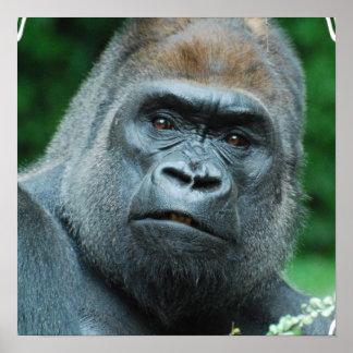 Perplexed Gorilla Poster