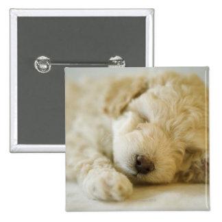 Perrito 2 del caniche el dormir pin cuadrado