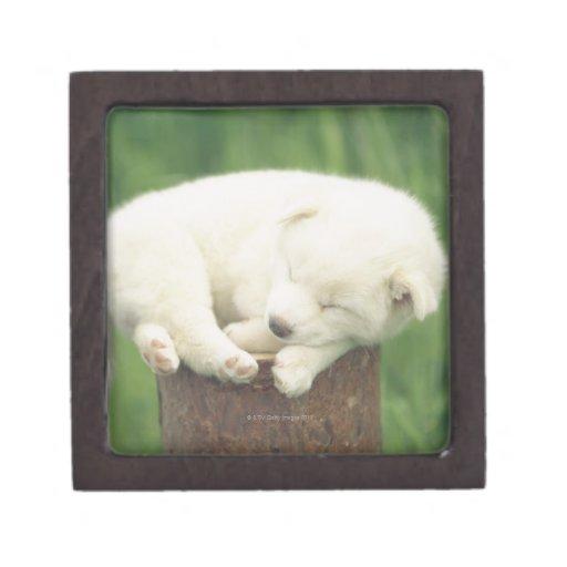 Perrito 4 cajas de recuerdo de calidad
