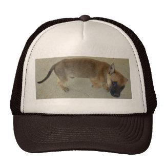Perrito adoptado gorras