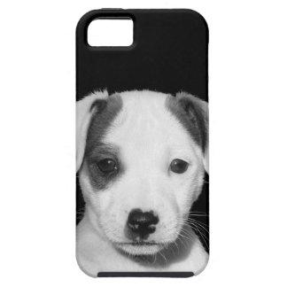 Perrito adorable de Jack Russell Terrier iPhone 5 Fundas