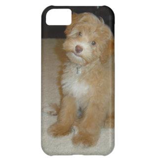 Perrito adorable de Schnoodle Funda Para iPhone 5C