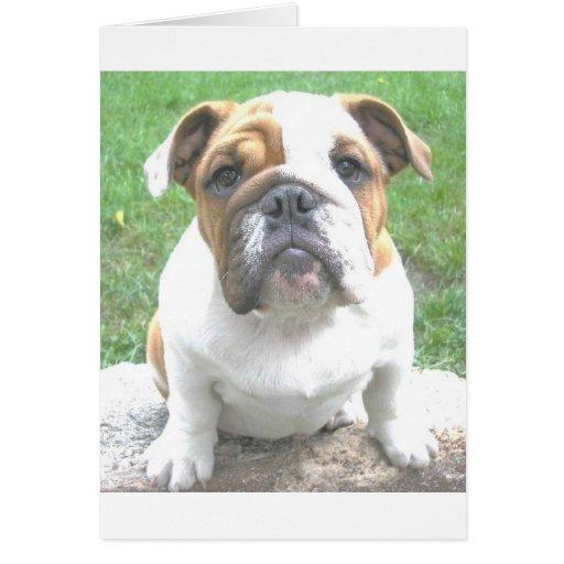 perrito adorable del dogo tarjeta de felicitación