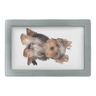 Perrito adorable hebillas de cinturón rectangulares