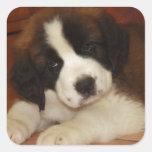 Perrito adorable y dulce de St Bernard Calcomanía Cuadradase