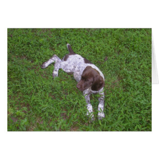 Perrito alemán del indicador de pelo corto en la tarjeta pequeña