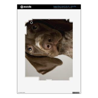 Perrito alemán del indicador de pelo corto iPad 3 pegatina skin