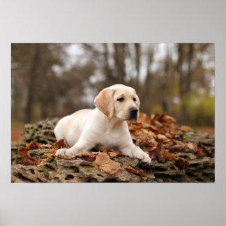 Perrito amarillo de Labrador en otoño Póster