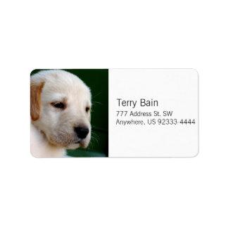 Perrito amarillo del laboratorio etiqueta de dirección