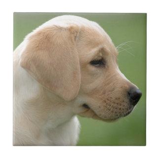 Perrito amarillo del labrador retriever azulejo cuadrado pequeño