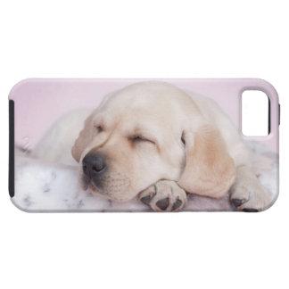 Perrito amarillo del labrador retriever iPhone 5 funda