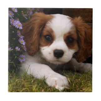 Perrito arrogante del perro de aguas de rey azulejo cuadrado pequeño