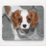 Perrito arrogante Mousepad del perro de aguas de r Alfombrilla De Ratón