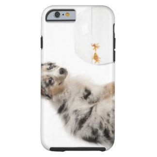 Perrito australiano azul del pastor de Merle que Funda Para iPhone 6 Tough