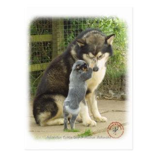 Perrito australiano del perro del ganado con el tarjetas postales