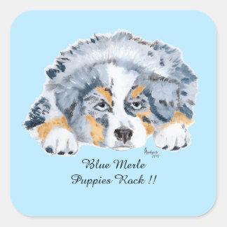 Perrito azul de Merle del pastor australiano Sq. Calcomania Cuadrada Personalizada
