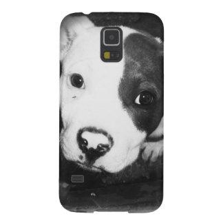 Perrito azul de Pitbull de la nariz Carcasa Para Galaxy S5