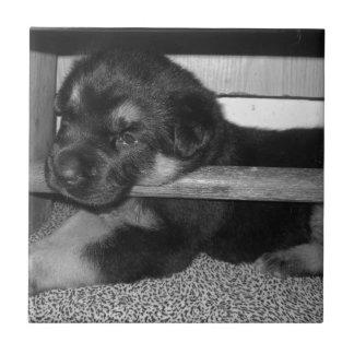 Perrito Black&White Azulejo Cuadrado Pequeño