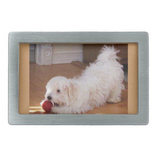Perrito blanco de Havanese que juega con la bola r Hebillas Cinturón