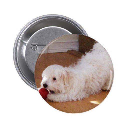 Perrito blanco de Havanese que juega con la bola r Pin Redondo 5 Cm