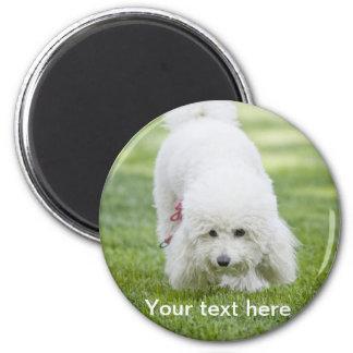 Perrito blanco imán redondo 5 cm