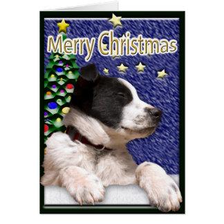 Perrito blanco y negro del border collie