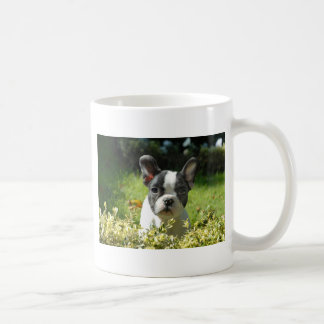 Perrito blanco y negro del perro de Bull del Taza Clásica
