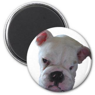Perrito británico del dogo imán redondo 5 cm