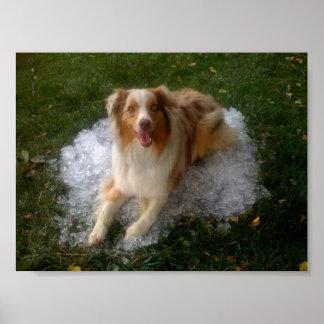 Perrito caliente en hielo frío póster
