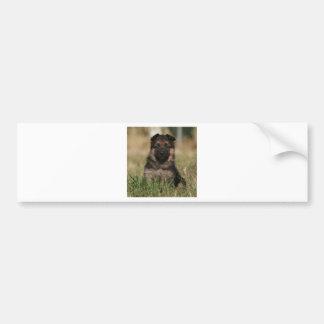 """Perrito """"chapoteo """" alemán del pastor etiqueta de parachoque"""