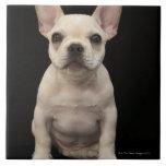 Perrito color nata del dogo francés azulejo cuadrado grande