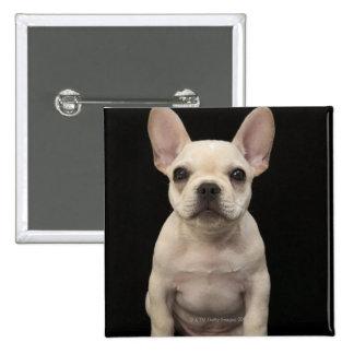 Perrito color nata del dogo francés pin cuadrada 5 cm