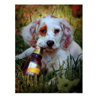 Perrito con la botella de cerveza tarjetas postales