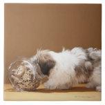 Perrito con la cabeza en tarro de galletas azulejo cuadrado grande
