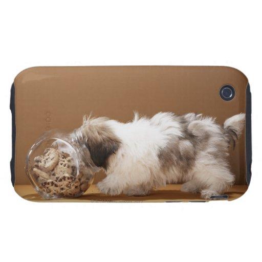 Perrito con la cabeza en tarro de galletas tough iPhone 3 fundas