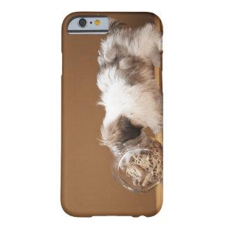 Perrito con la cabeza en tarro de galletas funda para iPhone 6 barely there