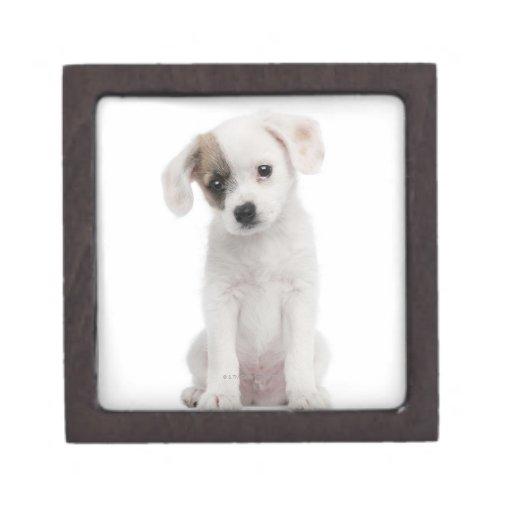 Perrito cruzado de la raza (2 meses) cajas de regalo de calidad