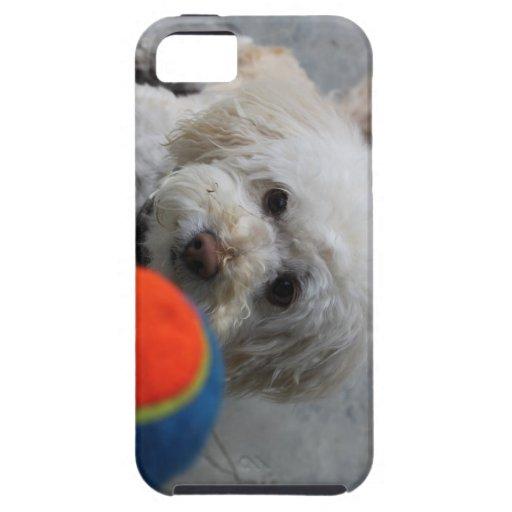 Perrito - cubierta del iPhone del perro - amor iPhone 5 Cárcasas
