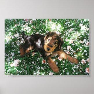 Perrito de Airedale en flowerfield Póster