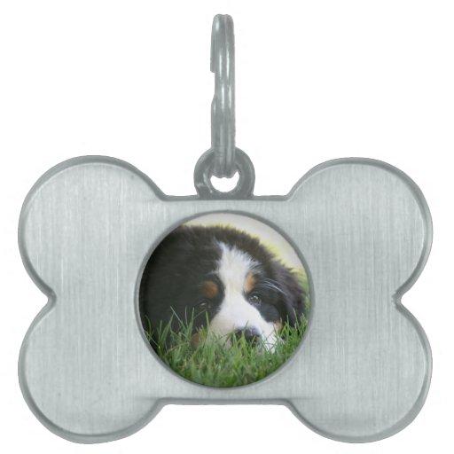 Perrito de Bernese Placas Mascota