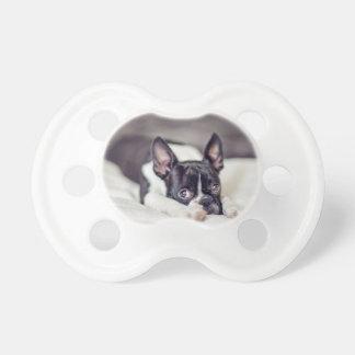 Perrito de Boston Terrier Chupetes De Bebe