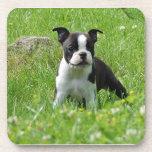 Perrito de Boston Terrier en sistema del práctico  Posavasos