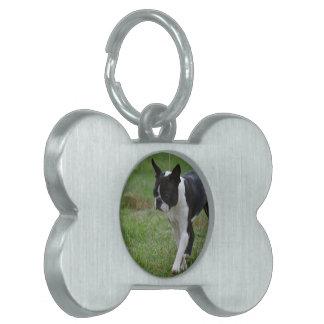 Perrito de Boston Terrier Placa Mascota